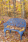 Yellow autumn leaves on blue metal bench in woods, Commonwealth of Virginia,