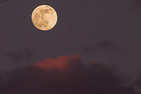 The nearly  full moon rising through clouds shortly after sunset.