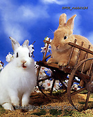 ANIMALS, REALISTISCHE TIERE, ANIMALES REALISTICOS, photos+++++,SPCHRABBIT94,#a#, EVERYDAY ,rabiit,rabbits, ,Easter,Eastern,