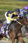 #10 Dream Spinner with jockey Luis S. Quinonez aboard during the running of the Honeybee Stakes (Grade III) at Oaklawn Park in Hot Springs, Arkansas-USA on March 8, 2014. (Credit Image: © Justin Manning/Eclipse/ZUMAPRESS.com)