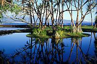 Historic fishpond, part of the Richardson Ocean Center, Keaukaha, east of Hilo