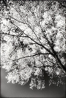 Tree limb<br />