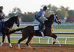 October 23, 2015:  Rachel's Valentina, trained by Todd Pletcher, and owned by Stonestreet Stables, is entered in the Breeder's Cup 14 Hands Winery Juvenile Fillies.  Candice Chavez/ESW/CSM