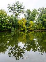 Totarm der kleinen Donau bei Kolarovo, Nitriansky kraj, Slowakei, Europa<br /> Cutoff of Small Danube River near Kolarovo, Nitriansky kraj, Slovakia Europe