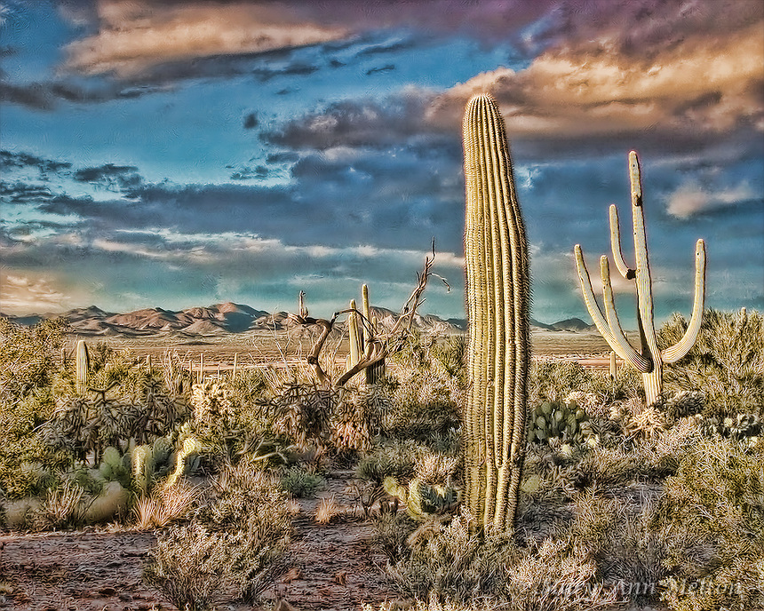 Sonoran Desert, Tucson Mountain Park