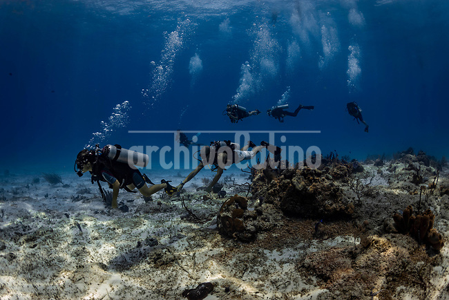 Cozumel is a year-round scuba diving destination in Mexico's Caribbean coast, known for its easy drift dives with stellar visibility, vibrantly colored sponges, and marine life like turtles, nurse sharks, and rays.<br /> At least 25 differents dive spots are around the island