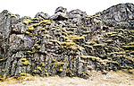 Moss on lava rock at Thingvellir
