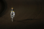 #11 Jockey Zac Purton warming up Goal for Gold for the race number 5 at Sha Tin racecourse on November 1, 2017 in Hong Kong, China. Photo by Marcio Machado / Power Sport Images