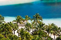 Beautiful palm tree overlooking the transparent, turquoise lagoon water, on Paradise Beach, Paradise Island, near Nassau, Bahamas