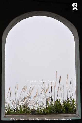 Window on reeds by a hazy day (Licence this image exclusively with Getty: http://www.gettyimages.com/detail/83154192 )