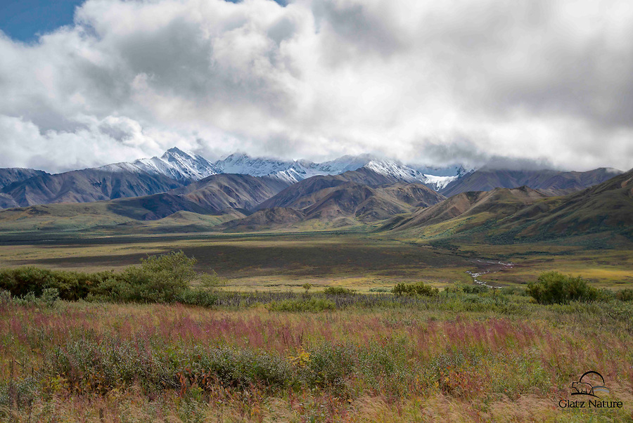 Fireweed in beautiful fall color, meadow, foothills, snow-capped peaks and clouds form layers of beauty in this scenic image.  Denali National Park, Alaska.