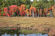 Pawtuckaway State Park in Nottingham, New Hampshire, USA during the autumn months..
