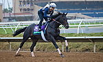 DEL MAR, CA - NOVEMBER 31: Beach Patrol, owned by James Covello, Sheep Pond Partners & Head of Plains Partners LLC and trained by Chad C. Brown, exercises in preparation for Longines Breeders' Cup Turf at Del Mar Thoroughbred Club on October 31, 2017 in Del Mar, California. (Photo by Jesse Caris/Eclipse Sportswire/Breeders Cup)