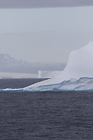 Chinstrap Penguins Pygoscelis antarcticus resting on Iceberg, Antarctica in Background. Weddel Sea, Southern Ocean, Antarctica