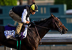 October 26, 2014:  Little Alexis, trained by Carlo Vaccarezza, exercises in preparation for the DraftKings Breeders' Cup Filly & Mare Sprint at Santa Anita Race Course in Arcadia, California on October 26, 2014. John Voorhees/ESW/CSM