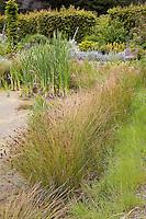 Reeds (Juncus) plant water filtration in bio pond at Digging Dog Nursery