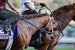 OCT 26 2014:Rennesgotzip trained by Peter Miller, exercises in preparation for the Breeders' CupTurf Sprint  at Santa Anita Race Course in Arcadia, California on October 26, 2014. Kazushi Ishida/ESW/CSM