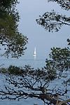 Voilier et pin parasol. Parc national des Cinque Terre. Ligurie. Italie.