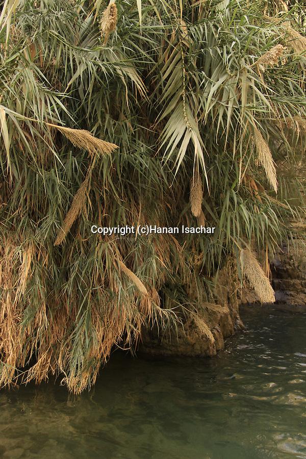 Israel, Judean Desert, David stream in Ein Gedi