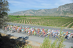 The peloton roll by during Stage 7 of the 2015 Presidential Tour of Turkey running 166km from Selcuk to Izmir. 2nd May 2015.<br /> Photo: Tour of Turkey/Mario Stiehl/www.newsfile.ie
