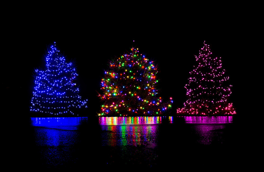 A trio of lit Christmas trees make for a riot of color on a rainy,dark winters night.