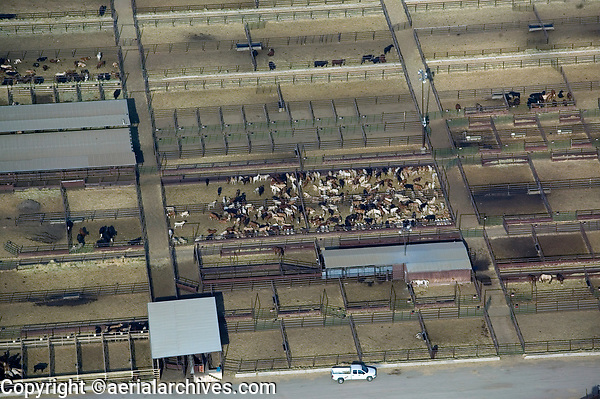 aerial photograph of a cattle feedlot in California's Central Valley