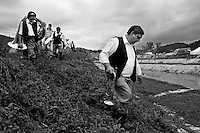 SERBIA. Guca. 9th August 2008..Band members make their way home along the riverbank after a parade through the streets of Guca..©Andrew Testa/Panos Pictures