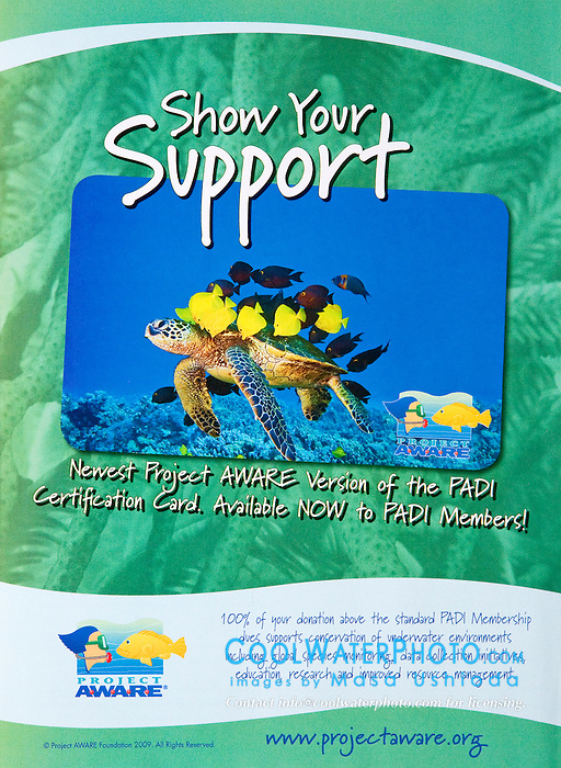 Project AWARE - PADI Certification Card Use, USA, Image ID: Green-Sea-Turtle-0097