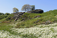 Burgruine Lilleborg (12.Jh.) auf der Insel Bornholm, Dänemark, Europa<br /> castle ruin Lilleborg (12.c.), Isle of Bornholm Denmark
