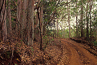 Picturesque view of the monroe trail on the island of Lanai
