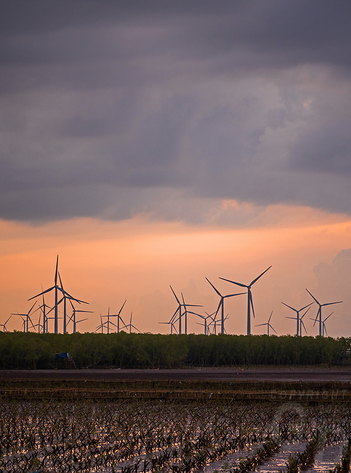 Windfarm and the regeneration of Mangroves at the coast of Bac Lieu, Mekong Delta.