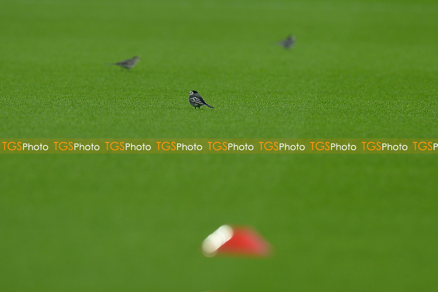 Birds on the pitch General view of the London Stadium during West Ham United vs Newcastle United, Premier League Football at The London Stadium on 12th September 2020