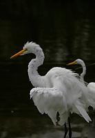 Flamingos Patos Guarás e Garças