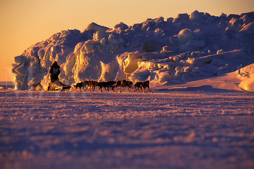 A sled team in training in an arctic landscape. Bering Sea Coast, Alaska.