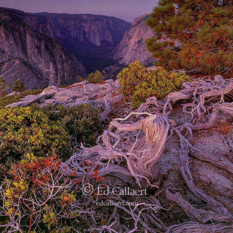 Dawn Above Yosemite Valley, Yosemite National Park, California
