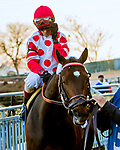 MARCH 09, 2019 : Post parade Mind Control & John Velazquez, the Gotham Stakes for 3-year olds at Aqueduct Racetrack on March  09, 2019 in Ozone Park, NY.  Sue Kawczynski/ESW/CSM