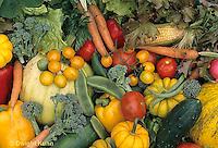 HS52-009b  Variety of harvested vegetables - squash, cucumber, tomato, corn, carrot, tomato, lettuce, broccoli, bean, pepper, pumpkin