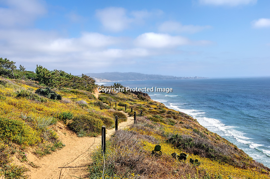 View at Torrey Pines Park near San Diego, CA, springtime with flowers in bloom.
