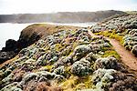 Image Ref: CA985<br /> Location: Bushrangers Bay Track<br /> Date of Shot: 28.09.19
