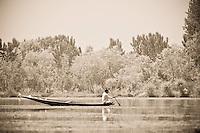 Kashmiri man paddling traditional shikara on Dal Lake, Srinagar, Kashmir, India.