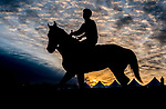 May 12, 2021: A horse exercises on the track at sunrise as Preakness Stakes hopefuls train at Pimlico Race Course in Baltimore, Maryland. Scott Serio//Eclipse Sportswire/CSM