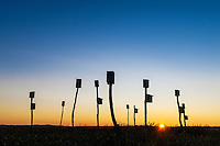 Birdhouses in a salt marsh at sunrise, Sandwich, Cape Cod, Massachusetts, USA