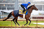 November 1, 2018: Thunder Snow (IRE), trained by Saeed bin Suroor, exercises in preparation for the Breeders' Cup Classic at Churchill Downs on November 1, 2018 in Louisville, Kentucky. Alex Evers/Eclipse Sportswire/CSM
