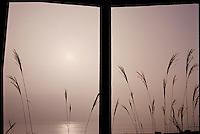 Pacific Window, Palisades Park, Santa Monica