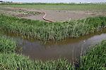 """Foto: VidiPhoto<br /> <br /> POORTVLIET - Niet alleen akkerbouwers/volle grondgroente, maar ook fruitteeltbedrijven hebben in grote delen van Zeeland te weinig zoet water beschikbaar. De provincie heeft nog steeds veel last van het zout dat na honderden jaren aan overstromingen is achtergebleven en via sloten zich vermengt met zoet water. Op de momenten dat water nodig is in het groeiseizoen, is er een structureel neerslagtekort. Gevolg is dat gewassen niet groeien of zelfs verbranden en de oogst mislukt. Om die reden is de provincie in 2019 gestart met het zogenoemde """"Zeeuws Deltaplan Zoet water"""". Om het provinciebestuur een handje te helpen en meer vaart in de waterstudies te brengen, heeft landbouworganisatie ZLTO samen met de agribusinessketens in Zeeland nu een eigen masterplan. Foto: Enorme slangen zijn er nodig om het water uit de sloten bij de gewassen te krijgen."""