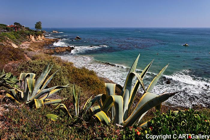 Pacific Coast - Photo by Alan Mahood.