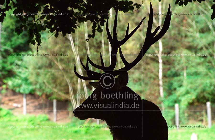 Germany, forest, stag with horns / DEUTSCHLAND, Wald, Gehege, Hirsch mit Geweih