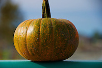 Pumpkin sitting on the railing of the Jacob Haldi Bridge. Pumpkins are dropped into the Bedford Chanel to be retrieved as part of the canoe race held by the Fort Langley Canoe Club at the Fort Langley Cranberry Festival.