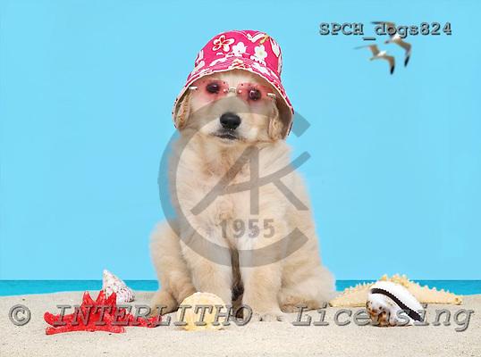 Xavier, ANIMALS, dogs, photos, SPCHDOGS824,#A# Hunde, perros
