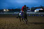 DEL MAR, CA - OCTOBER 31: Suedois, owned by George Turner & Clipper Logistics and trained by David O'Meara, exercises in preparation for Breeders' Cup Mile during morning workouts at Del Mar Thoroughbred Club on October 31, 2017 in Del Mar, California. (Photo by Jon Durr/Eclipse Sportswire/Breeders Cup)